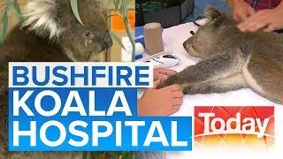 Koalas fighting for survival at volunteer bushfire hospital   Today Show Australia