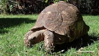 Симиен, Эфиопия: бабуины-гелада, таймлапсы и черепахи