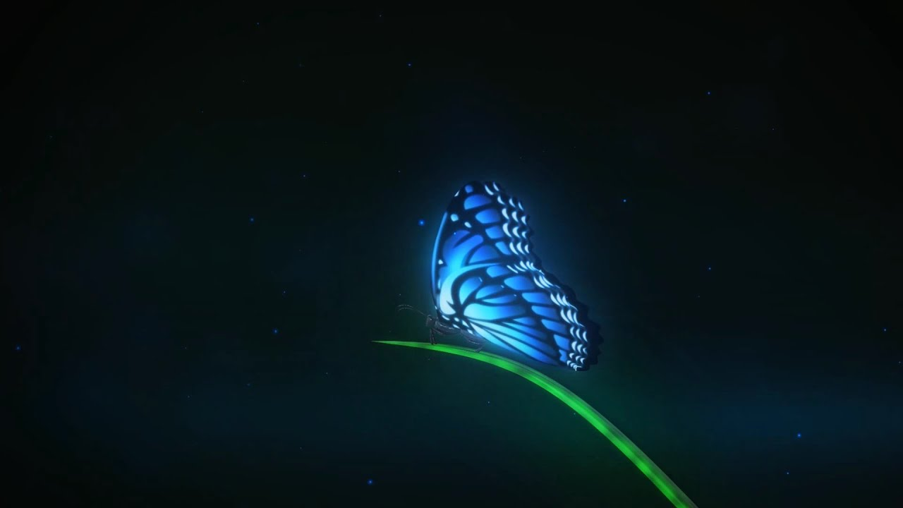 magic butterfly reveal - intro template