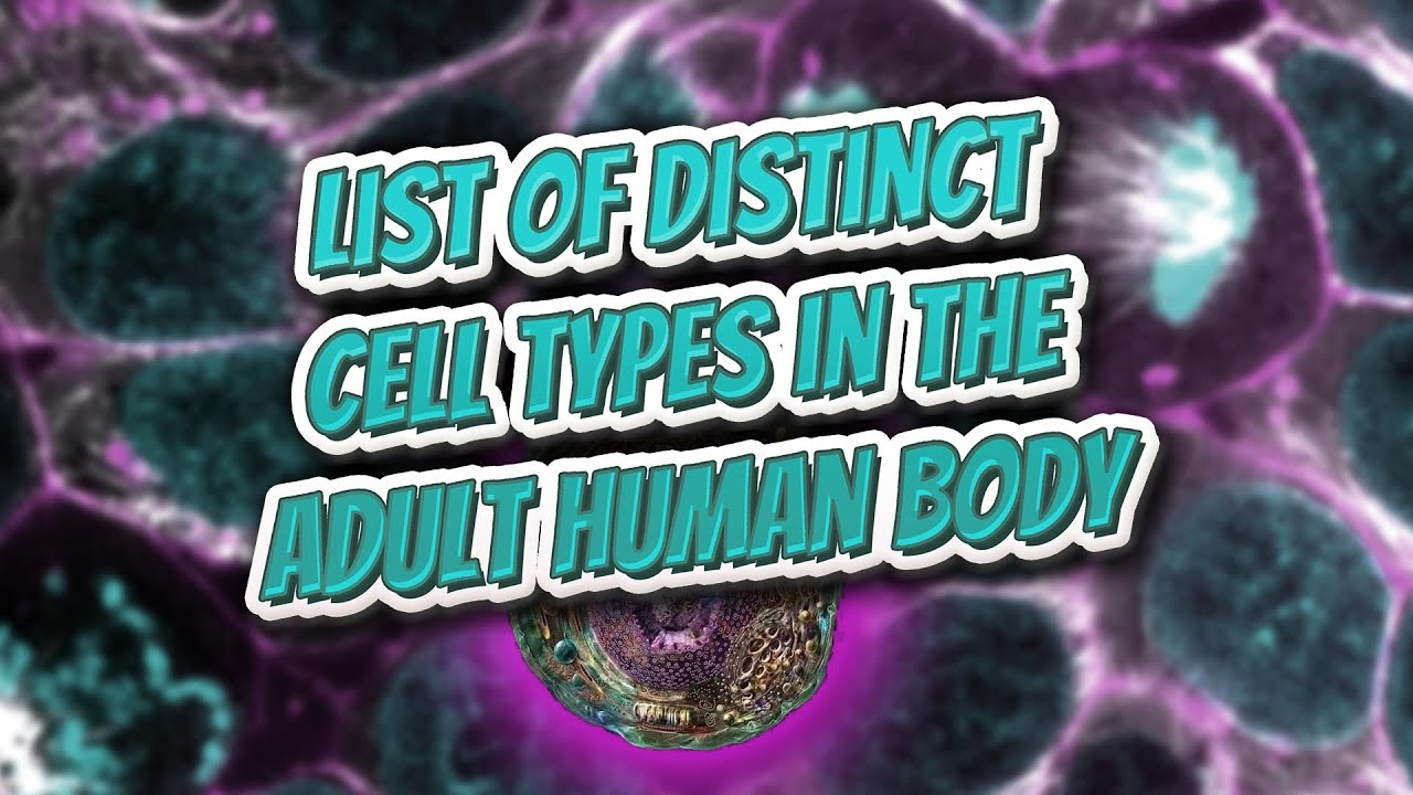 type in distinct body Adult human cell