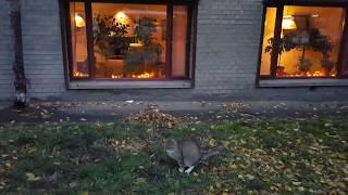 Кот сходил в туалет напротив ресторана 2017