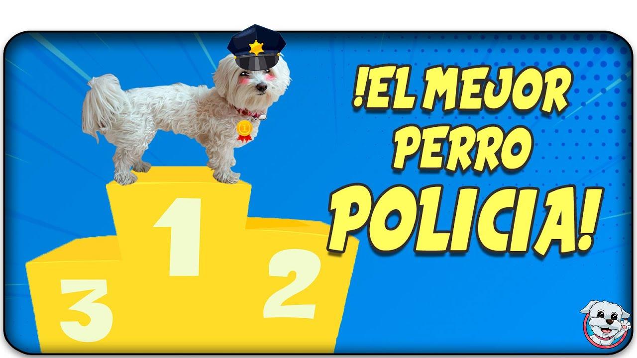 El Mejor PERRO POLICIA del Mundo! Me pone Multas! 🚓🐶 Anima Dogs