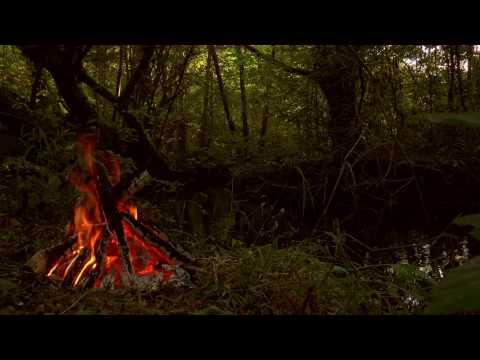 Forest Campfire near Small Stream with Relaxing Fire and Water Sounds