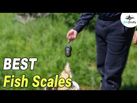 Best Fish Scales In 2020 –Top Digital & Regular Models Compared
