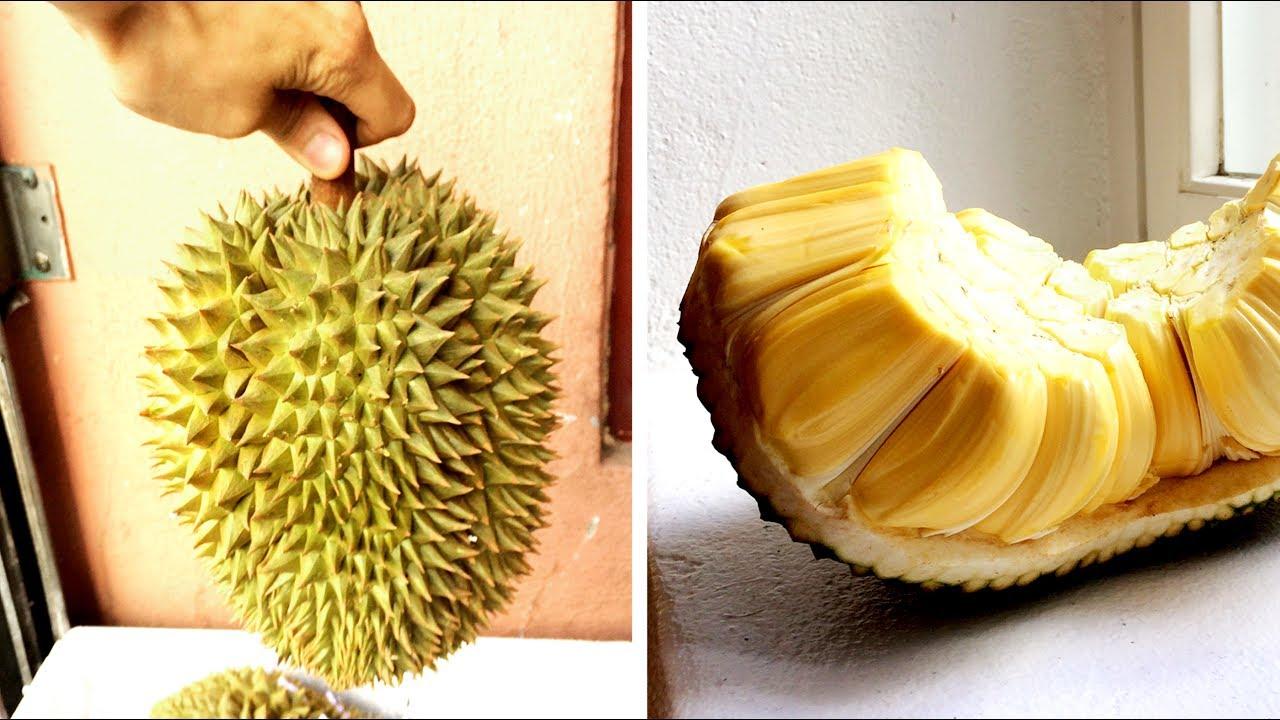 WHAT DOES JACKFRUIT TASTE LIKE? | DURIAN & JACKFRUIT ... Jackfruit Vs Durian