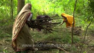 Women clearing forest and collecting timber in Uttar Pradesh
