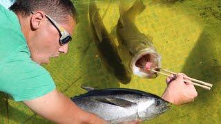 JAWS VS TUNA Expensive Fish Battle In AQUARIUM!