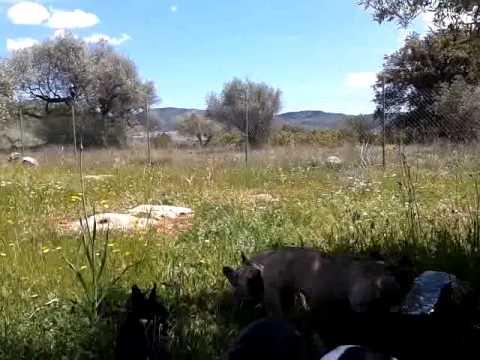 video 2012 04 29 14 11 18
