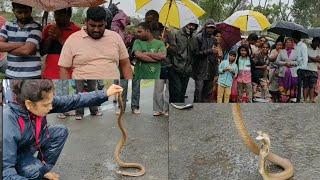 || देखिये नाग कहा छिप सकता है || Indian spectacled cobra, rescued by Nirzara Chitti ||