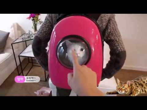 Backpack переноска для кота