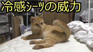 冷感シーツに猫もうっとり…しかしこれ毛玉できるな…毛玉できないの買って猫用にしようか…?