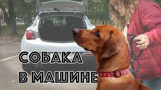 Собака в машине | DogTalk