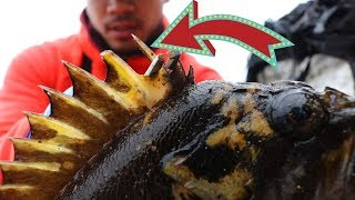 Catch and Cook: VENOMOUS Rockfish off the ROCKS