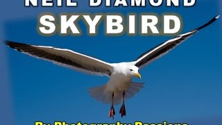SKYBIRD, NEIL DIAMOND, JOHNATHAN LIVINGSTONE SEAGULL: Photography Passions