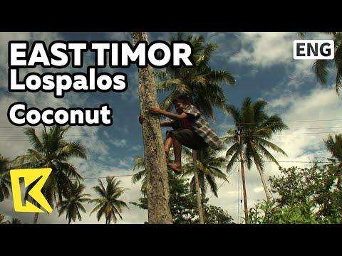 【K】EastTimor Travel-Lospalos[동티모르 여행-로스팔로스]코코넛 따는 아이와 코코넛오일/Coconut/Lospalos