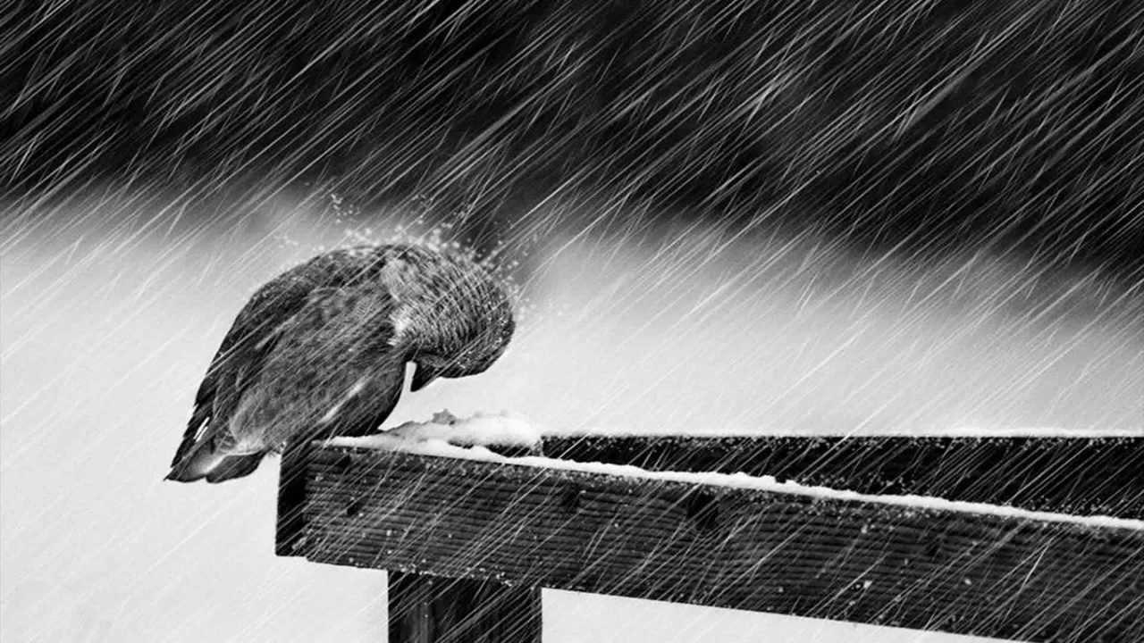 Image result for پرنده غمگین