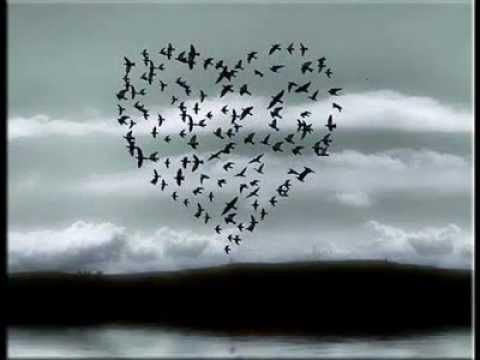 Sevgi Kuşun Kanadında.- Banu