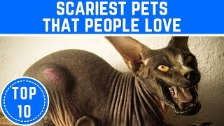 Top 10 Scariest Pets That People Love - TTC