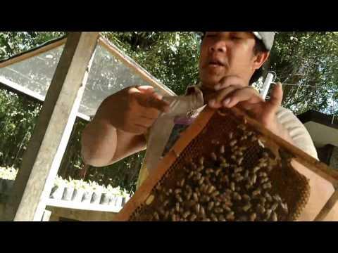 Bohol Bee Farm, Philippines