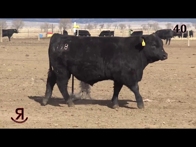 Reverse Rocking R Ranch Lot 40