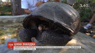 Вчені знайшли черепаху, вид якої вважали вимерлим ще століття тому
