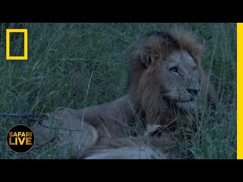 Safari Live - Day 125   National Geographic