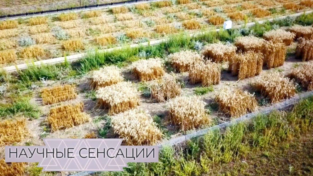 Научные сенсации. ГМО-революция - суперпродукты