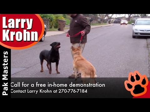 Bruno The Rottweiler Helps Aggressive Dog For Pak Masters Dog Training of Nashville