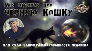 Чёрная кошка или Сила запрограммированности человека
