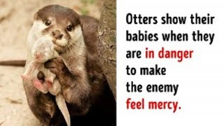 Animal Facts That Made Us Go Awww