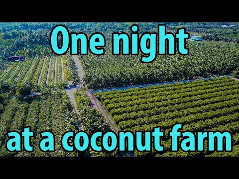 #42 – Staying a night at my cousins Coconut farm in Ratchaburi Thailand