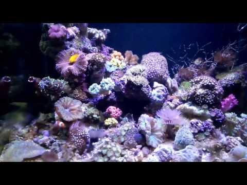 Marine reef. (Samudera jaya)