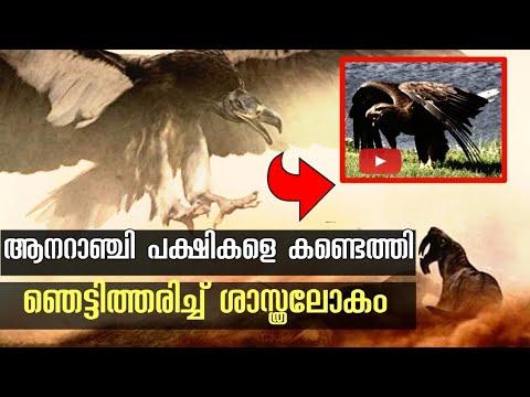 ಹುಡುಗಿಯರು ಈ ಆಪ್ ನಲ್ಲಿ ವಾಟ್ಸಪ್ ನಂಬರ್ ಕೊಡೊಕೆ ರೆಡಿಯಾಗಿದ್ದಾರೆ | Kannada Tech Maahiti from YouTube · Duration:  3 minutes