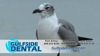 Gulfside Dental