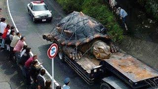 70 世界上最大的动物 thumbnail