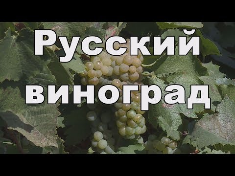 Виноградарство Крыма. 5