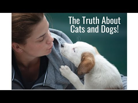 The truth about cats and dogs!