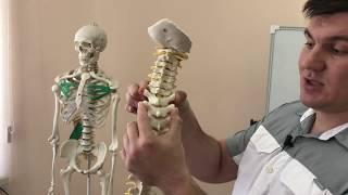 видео Прием мануального терапевта в Москве