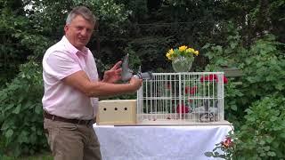 Gołębie na urodziny dla taty Henia tel. 728 465 939