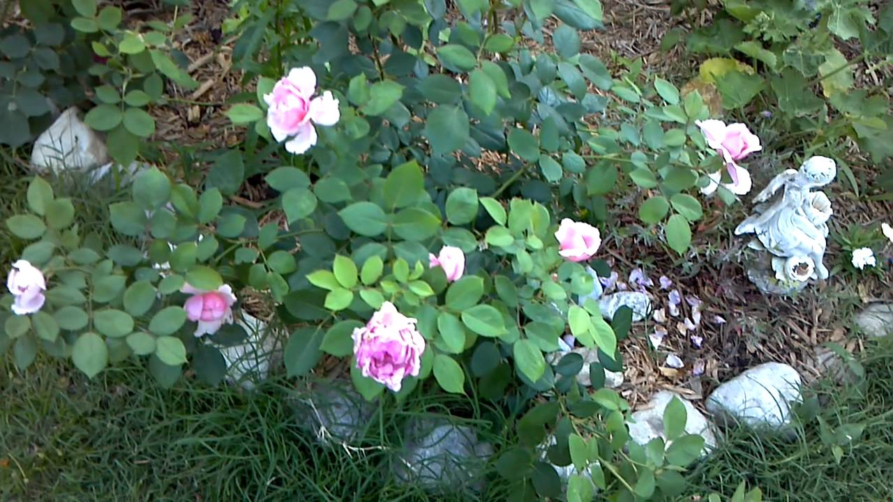 partnervermittlung roses aulendorf
