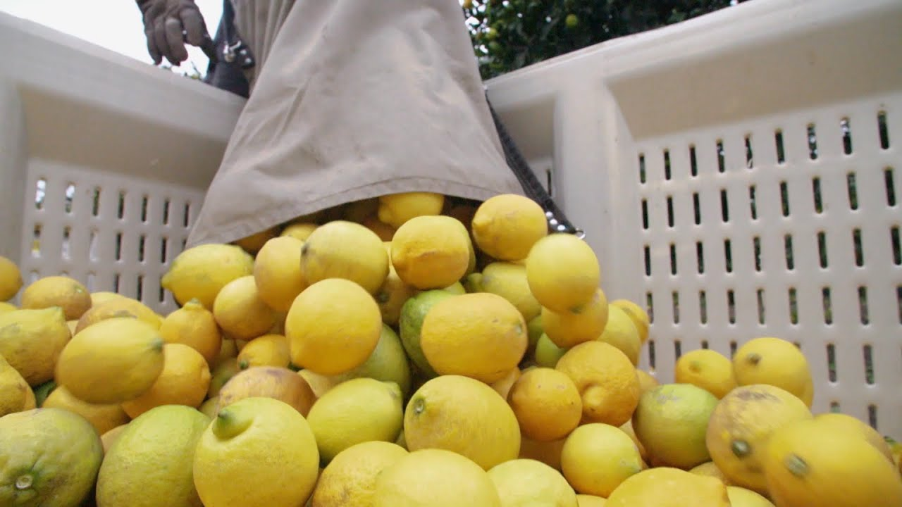 Food Factory USA 2: le citron