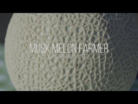 'The Art of Musk Melon' - Expensive fruit of Japan