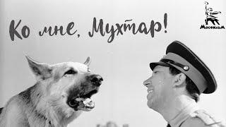 Ко мне, Мухтар! (4К, драма, реж. Семён Туманов, 1964)