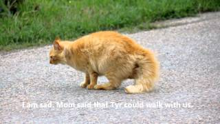 A Walk with Dempsey, the Polydactyl Cat (music added)