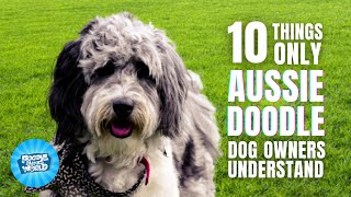 10 Things Only Aussiedoodle Dog Owners Understand | Poodle Mixes World