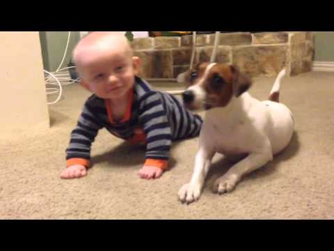 Thumbnail: Jack Russell Dog teaches baby to crawl!!
