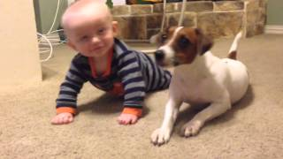 Jack Russell Dog teaches baby to crawl!!
