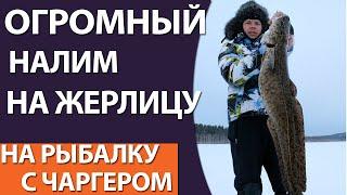 Трофейный налим на жерлицу(Ловля налима на жерлицы в ноябре 2016 года на реке Ангара, Иркутск., 2016-12-16T09:07:09.000Z)