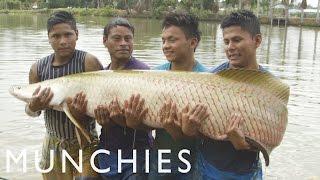 Amazonian Aphrodisiacs And 400-pound Fish: Being Frank Peru (part 2/2)
