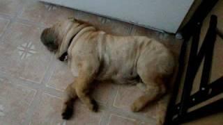 Guard Dog On Duty!!!